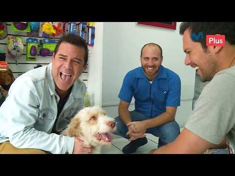 Patas y Garras - Adolfo Aguilar adopta una mascota