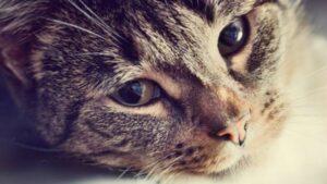Día Mundial del Gato: 20 curiosidades que quizá no sabes de estos felinos